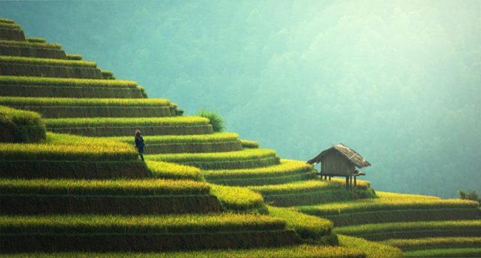 przegląd najbardziej popularnych traw